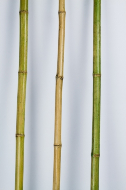 Tall bamboo sticks decor for How to decorate bamboo sticks